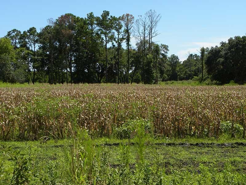 The Farms at Brick House Plantation Lots For Sale - 0 River, Johns Island, SC - 6