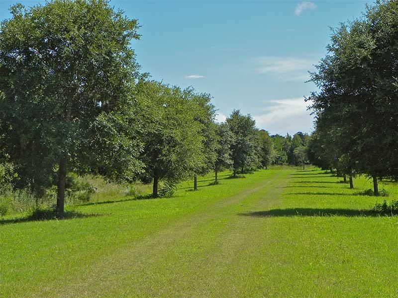 The Farms at Brick House Plantation Lots For Sale - 0 River, Johns Island, SC - 11
