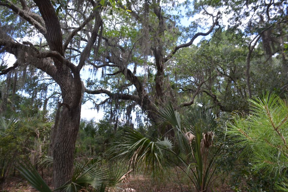 1db  Cotton Bay Court Edisto Island, SC 29438
