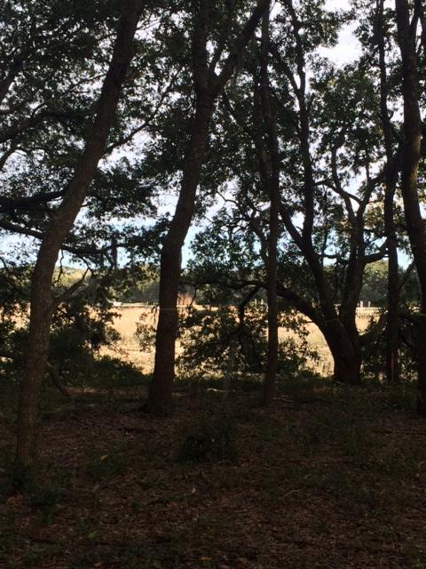1125  Hills Plantation Drive Charleston, SC 29412