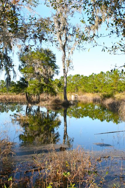 The Farms at Brick House Plantation Lots For Sale - 0 River Road, Johns Island, SC - 6