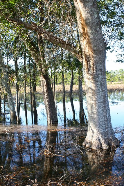 The Farms at Brick House Plantation Lots For Sale - 0 River Road, Johns Island, SC - 7