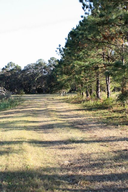 The Farms at Brick House Plantation Lots For Sale - 0 River Road, Johns Island, SC - 13