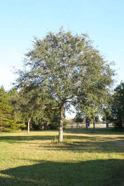 The Farms at Brick House Plantation Lots For Sale - 0 River Road, Johns Island, SC - 19