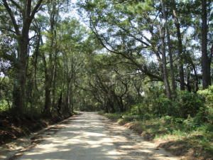 Lot 6  Jenkins Hill Road Edisto Island, SC 29438