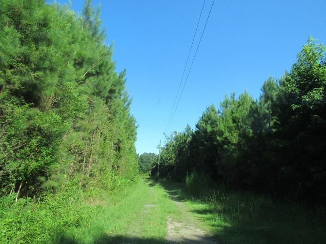 6481  Spring Grove Road Adams Run, SC 29426