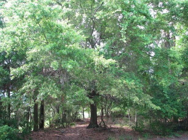 39  Seagrass Lane Isle Of Palms, SC 29451