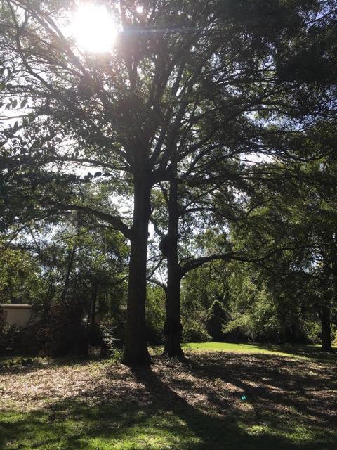 4675 W West Montague Avenue North Charleston, SC 29418