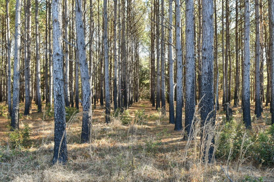 Whaley And Seabrook Lots For Sale - 0 Jehossee, Edisto Island, SC - 0