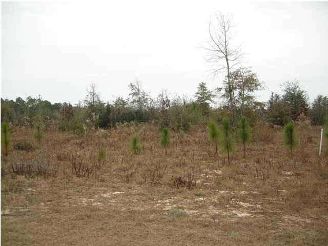LOT N Hwy 331 - 24 Acres, Defuniak Springs, FL 32433