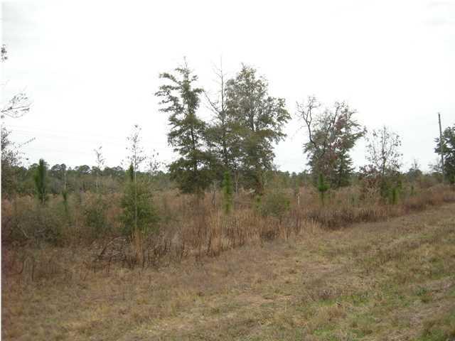 Lot N Hwy 331 - 24 Acres