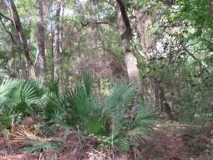 A   Deer Moss Creek Ph 1 Residential Land