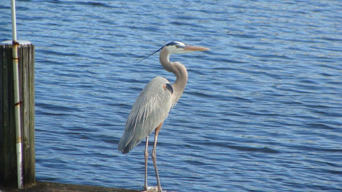 Wildlife on Rainberry Lake