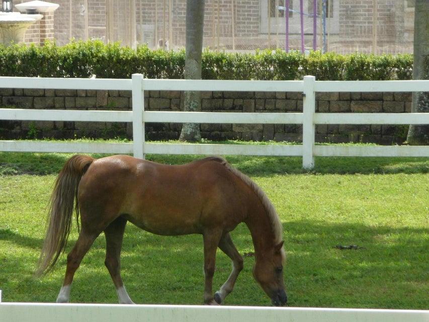 Agricultural Land 为 销售 在 NE 43rd Avenue 奥拉卡, 佛罗里达州 34479 美国