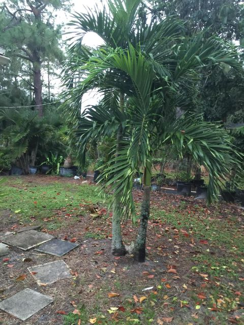 Additional photo for property listing at 4660 130th Avenue N 4660 130th Avenue N West Palm Beach, Florida 33411 Vereinigte Staaten