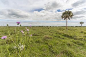 Agricultural Land for Sale at SW Hosanah Lane SW Hosanah Lane Okeechobee, Florida 34974 United States