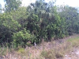 Additional photo for property listing at 1740 NW 42nd Avenue 1740 NW 42nd Avenue Okeechobee, Florida 34972 Estados Unidos