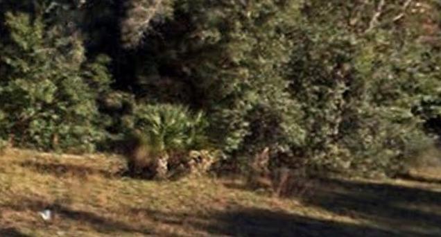 土地 为 销售 在 NE 141st Place NE 141st Place Fort Mc Coy, 佛罗里达州 32134 美国