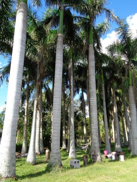 11920 52nd Road Royal Palm Beach, FL 33411 photo 6