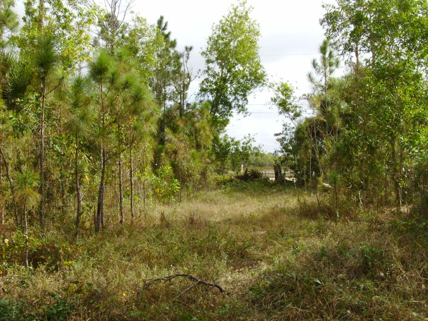 Additional photo for property listing at 3659 Cabbage Palm Way 3659 Cabbage Palm Way Loxahatchee, Florida 33470 Estados Unidos
