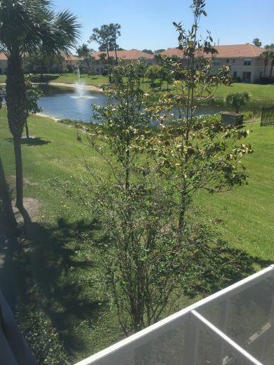 701 Seminole Palms Drive Lake Worth, FL 33463 photo 11