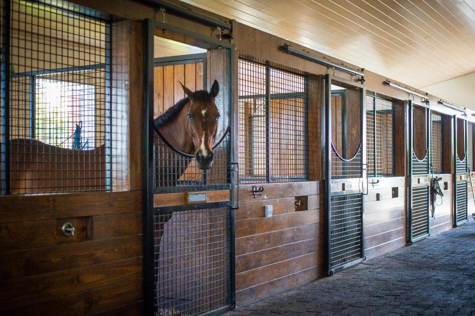 14343 Equestrian Way Wellington, FL 33414 photo 20