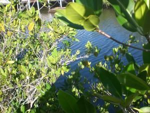 Additional photo for property listing at Lot 9 Peg Leg Road Lot 9 Peg Leg Road Little Torch Key, Florida 33042 Hoa Kỳ