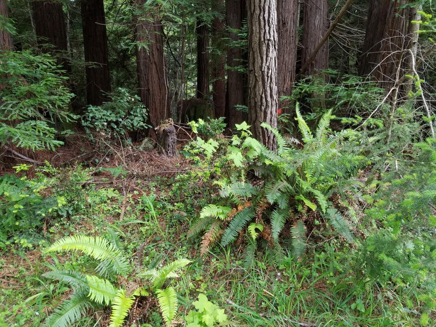 Additional photo for property listing at 17500 Redwood Springs Drive 17500 Redwood Springs Drive Fort Bragg, 加利福尼亚州 95437 美国