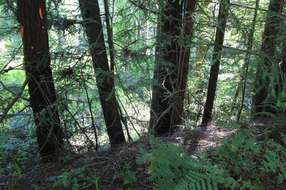 Additional photo for property listing at 27610 State Hwy 20 27610 State Hwy 20 Fort Bragg, California 95437 United States