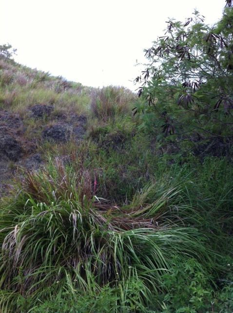 Land / Lots for Sale at Cruz Merizo, Guam 96915