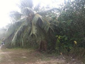 Land / Lots for Sale at East Gayinero Yigo, Guam 96929