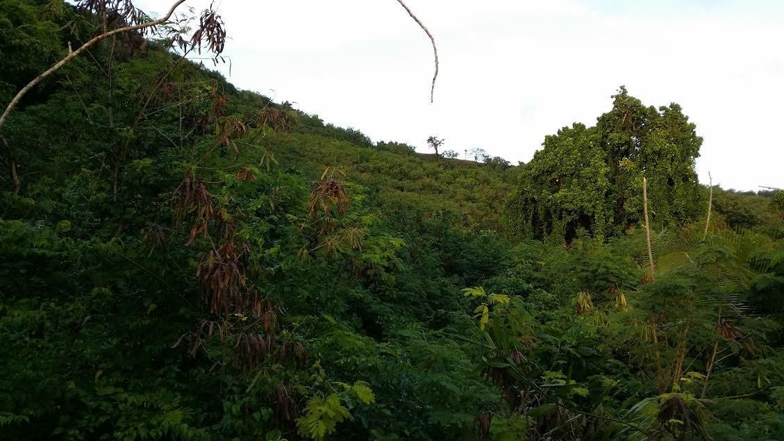 Land / Lots for Sale at Naki Street Naki Street Chalan Pago Ordot, Guam 96910