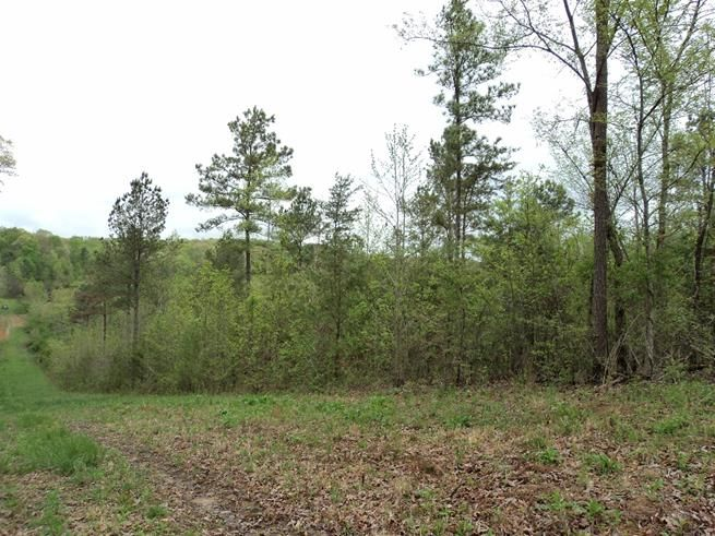 Photo of home for sale at Lot 9 County Road 118, Riceville TN