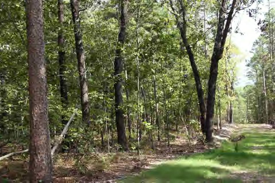 Wooded lot view.
