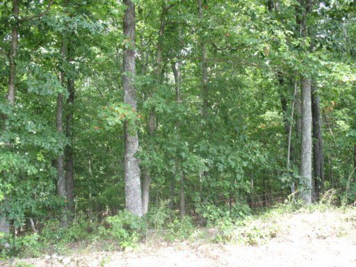Additional photo for property listing at Lot 26 N Pone Valley Road Lot 26 N Pone Valley Road Decatur, 田纳西州 37322 美国