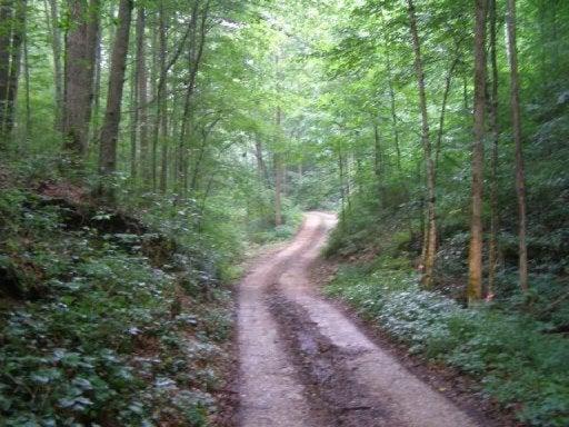 Земля для того Продажа на 177.8 Acrs Lost Cane Creek Road 177.8 Acrs Lost Cane Creek Road Jamestown, Теннесси 38556 Соединенные Штаты