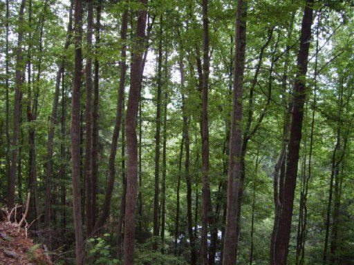 Land for Sale at Fairview Fairview Madisonville, Tennessee 37354 United States