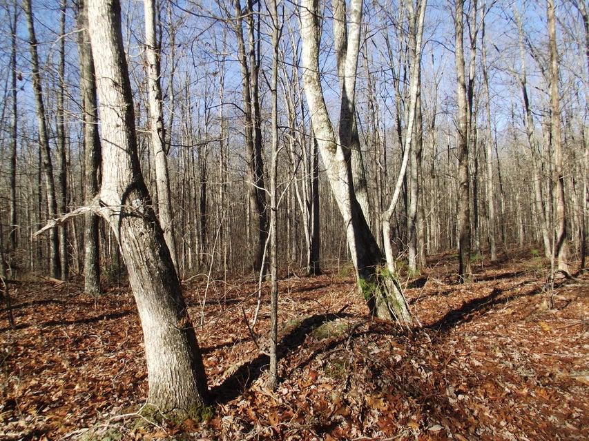 Additional photo for property listing at 8 Hemlock Trail  Graysville, 田纳西州 37338 美国