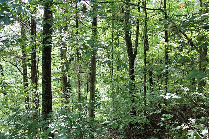 Land for Sale at Hillcrest Drive Parrottsville, Tennessee 37843 United States
