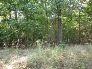 Additional photo for property listing at Lot #76 E Ridge Road Lot #76 E Ridge Road Spring City, Tennessee 37381 Estados Unidos