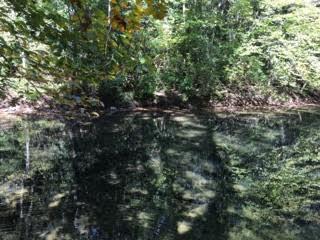 Terrain pour l Vente à N Obey River Fork Lane Crawford, Tennessee 38554 États-Unis