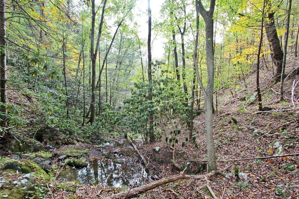 Land for Sale at 73.5 Acres Dogwood Stand (Off) 73.5 Acres Dogwood Stand (Off) Hartford, Tennessee 37753 United States