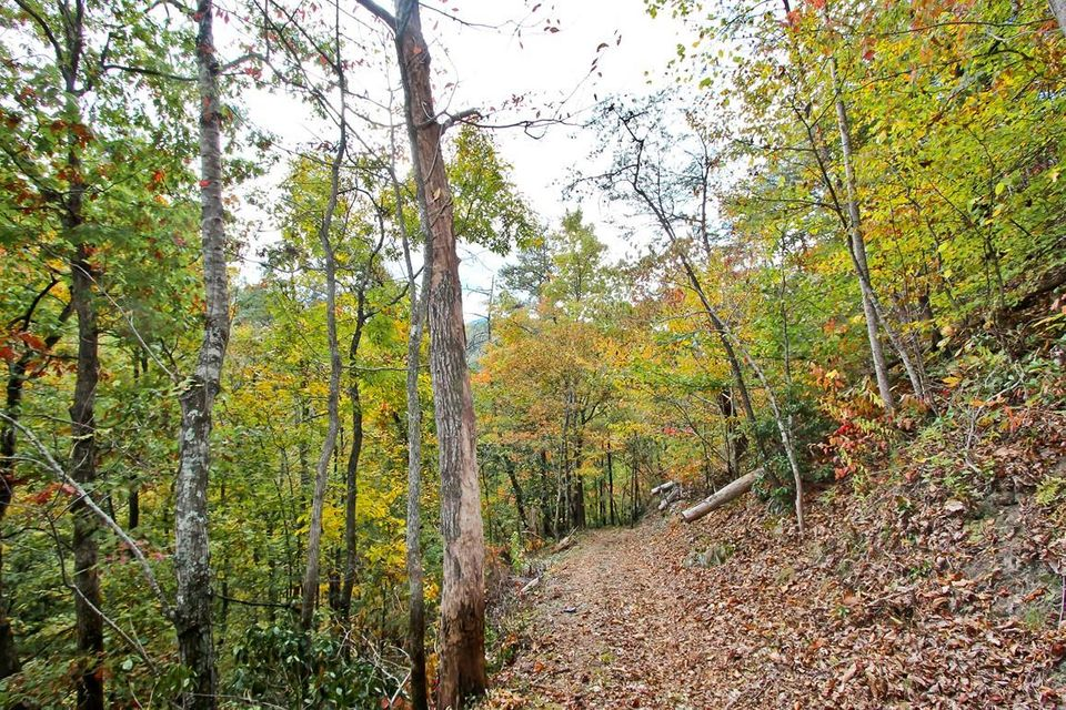 Additional photo for property listing at 73.5 Acres Dogwood Stand (Off) 73.5 Acres Dogwood Stand (Off) Hartford, Tennessee 37753 United States