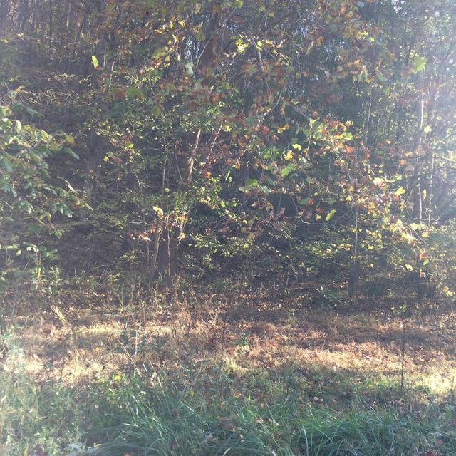 Additional photo for property listing at 691 Little Creek Road 691 Little Creek Road Harrogate, Tennessee 37752 United States