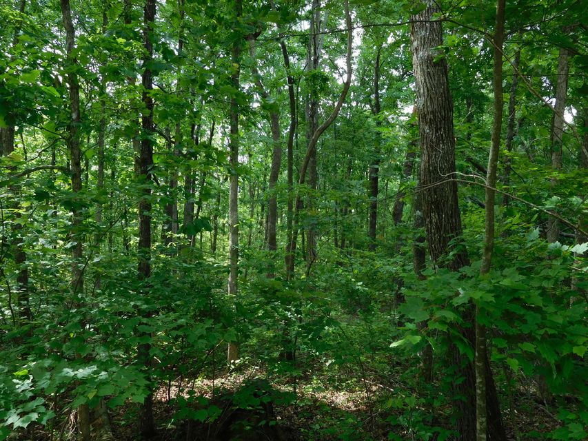 Additional photo for property listing at East Overlook Road  Monterey, Tennessee 38574 États-Unis