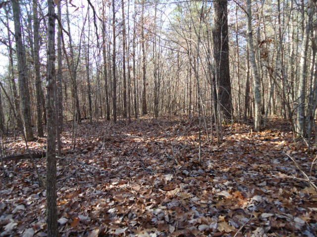 Land for Sale at 14.40 Ac. Deep Branch Lane Wilder, Tennessee 38589 United States