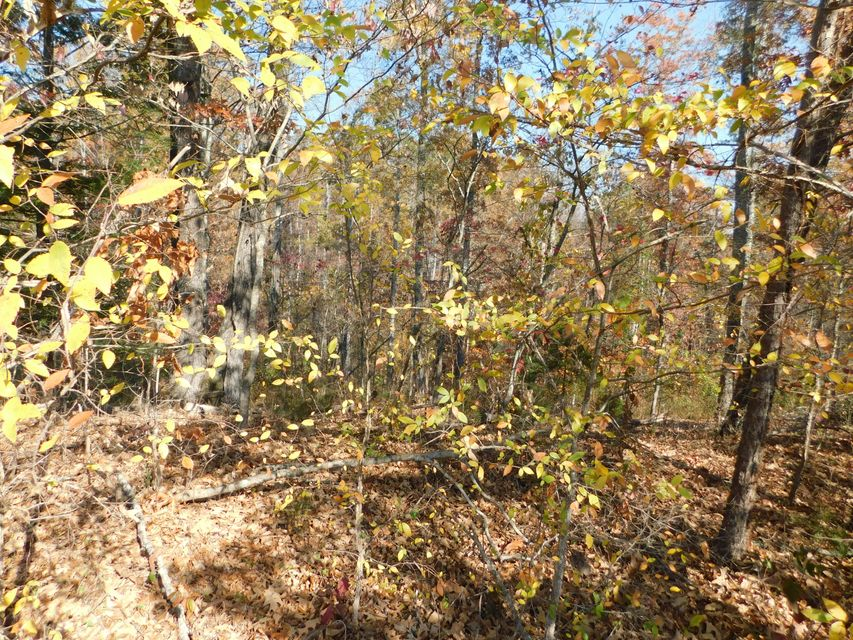 Additional photo for property listing at English Mountain Road English Mountain Road Cosby, Tennessee 37722 Estados Unidos