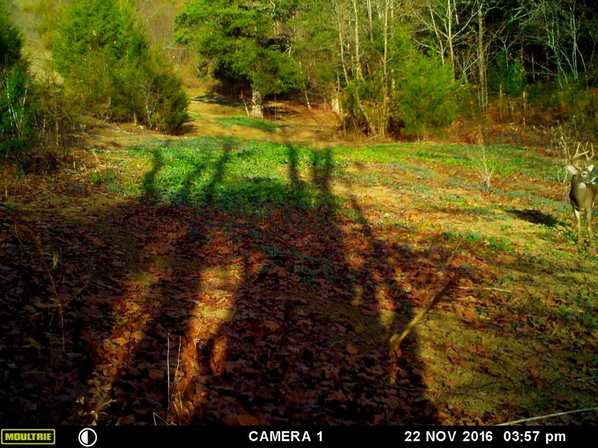 Additional photo for property listing at 300 Redbud Circle  Luttrell, Tennessee 37779 United States