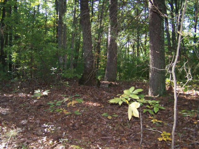 Additional photo for property listing at Finger Board Road Road Finger Board Road Road Tellico Plains, Tennessee 37385 États-Unis