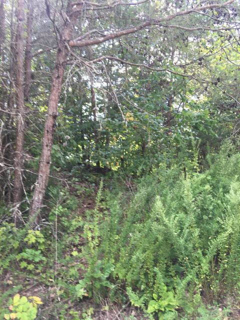 Additional photo for property listing at Mountain Shores Road Mountain Shores Road New Tazewell, 田纳西州 37825 美国